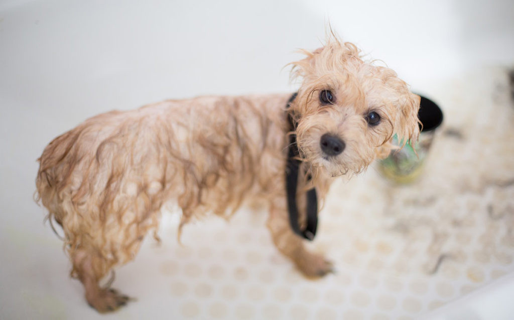 bañera de perros