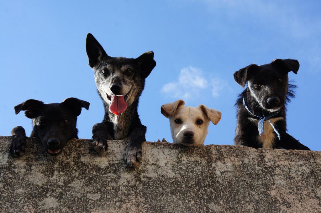 Perros asomados